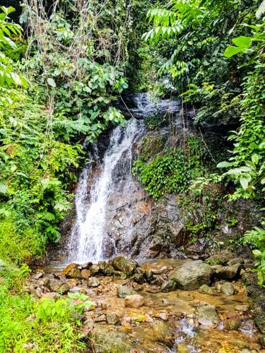 Bukit Lawang Jungle Trek Full Size 20