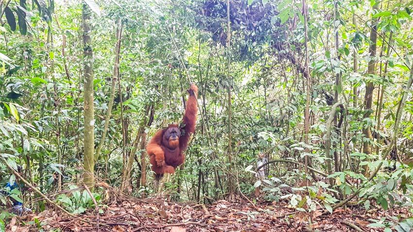 Bukit Lawang Jungle Trek Full Size 34