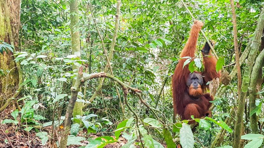 Bukit Lawang Jungle Trek Full Size 36