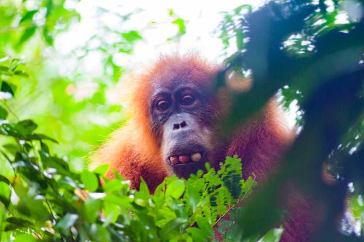 Bukit Lawang Jungle Trek Full Size 41