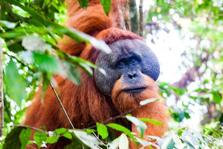 Bukit Lawang Jungle Trek Full Size 46