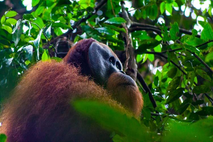 Bukit Lawang Jungle Trek Full Size 52