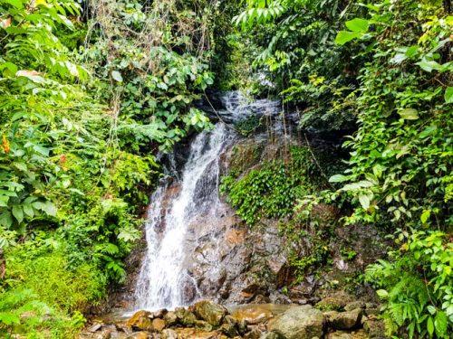 Bukit Lawang Jungle Trek Full Size 19