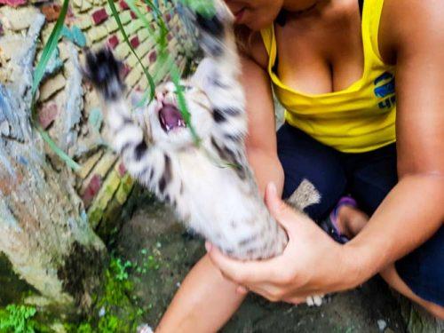 Bukit Lawang Jungle Trek Full Size 26