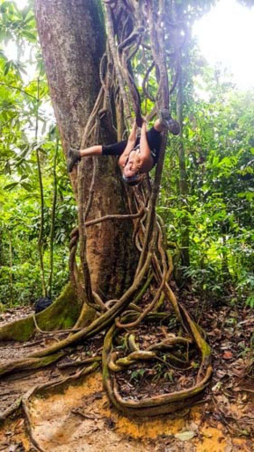 Bukit Lawang Jungle Trek Full Size 32