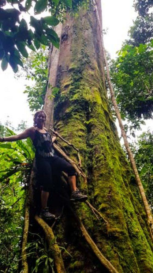Bukit Lawang Jungle Trek Full Size 33