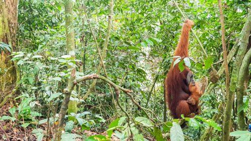 Bukit Lawang Jungle Trek Full Size 35