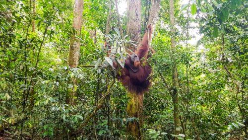 Bukit Lawang Jungle Trek Full Size 37