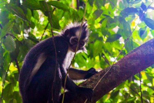 Bukit Lawang Jungle Trek Full Size 39