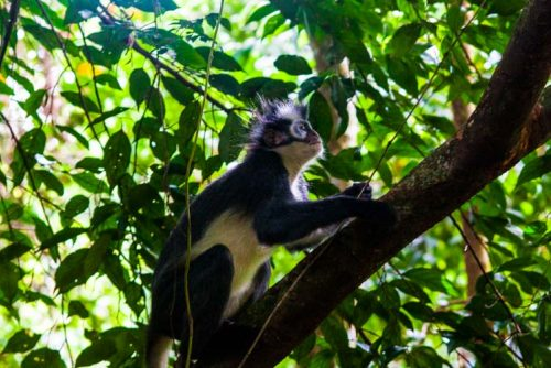 Bukit Lawang Jungle Trek Full Size 40