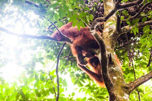 Bukit Lawang Jungle Trek Full Size 44