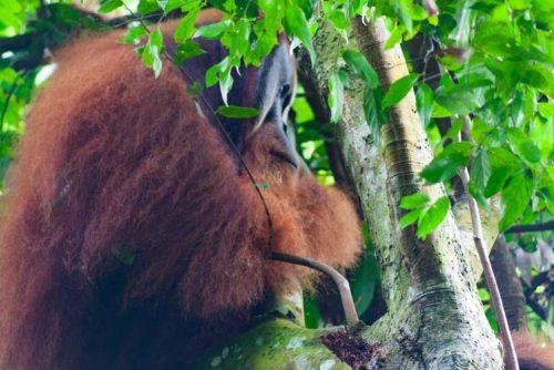 Bukit Lawang Jungle Trek Full Size 45