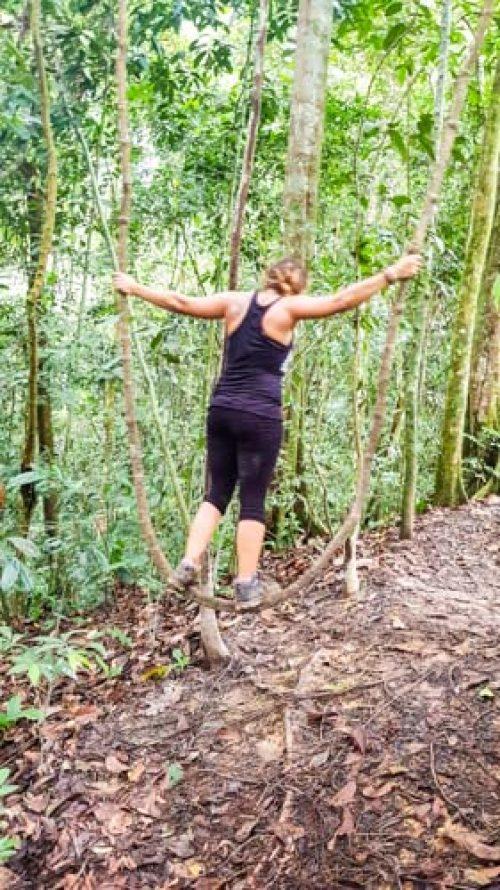Bukit Lawang Jungle Trek Full Size 48