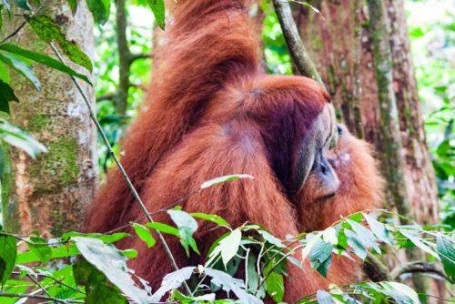 Bukit Lawang Jungle Trek Full Size 49