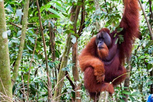 Bukit Lawang Jungle Trek Full Size 50