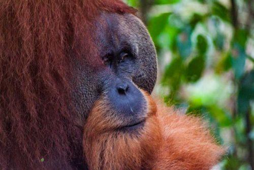 Bukit Lawang Jungle Trek Full Size 51