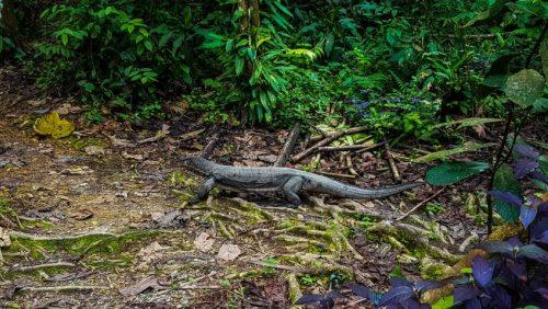 Bukit Lawang Jungle Trek Full Size 57