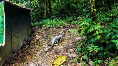 Bukit Lawang Jungle Trek Full Size 58